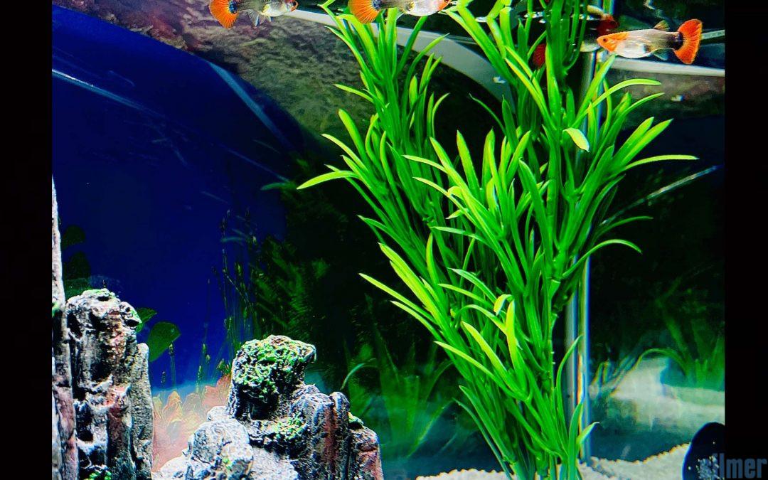 Granulats pour aquariums